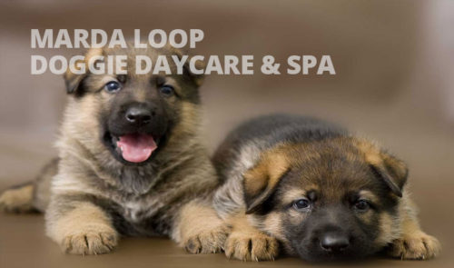 Marda Loop Doggie Daycare & Spa